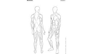 KELLER Einlageblatt 6 Muskulatur